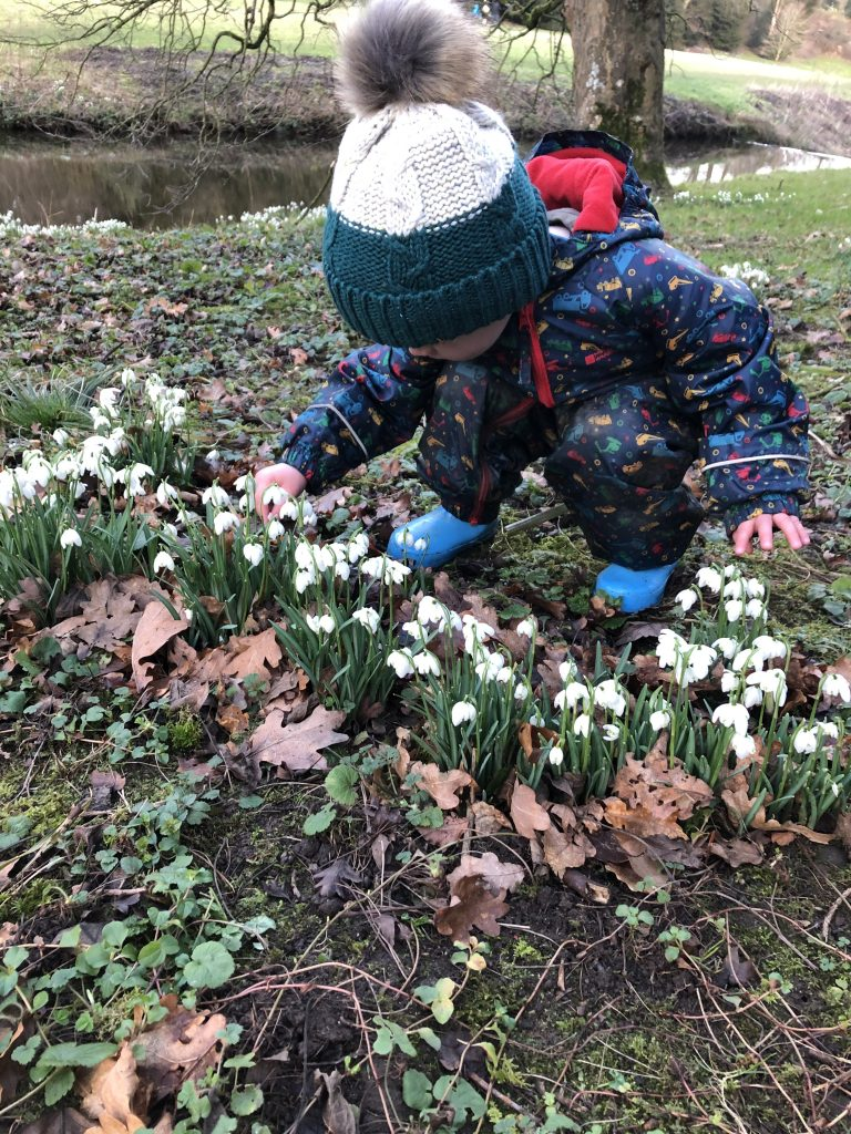 winter time - snow drops