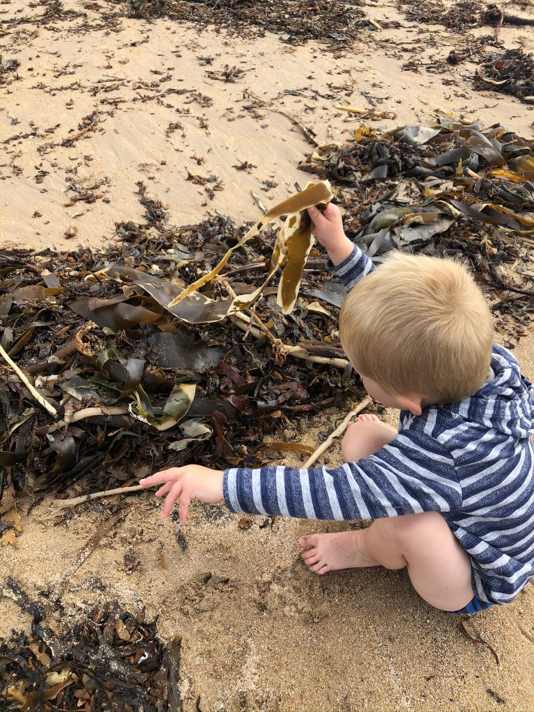 routing through seaweed on druridge beach