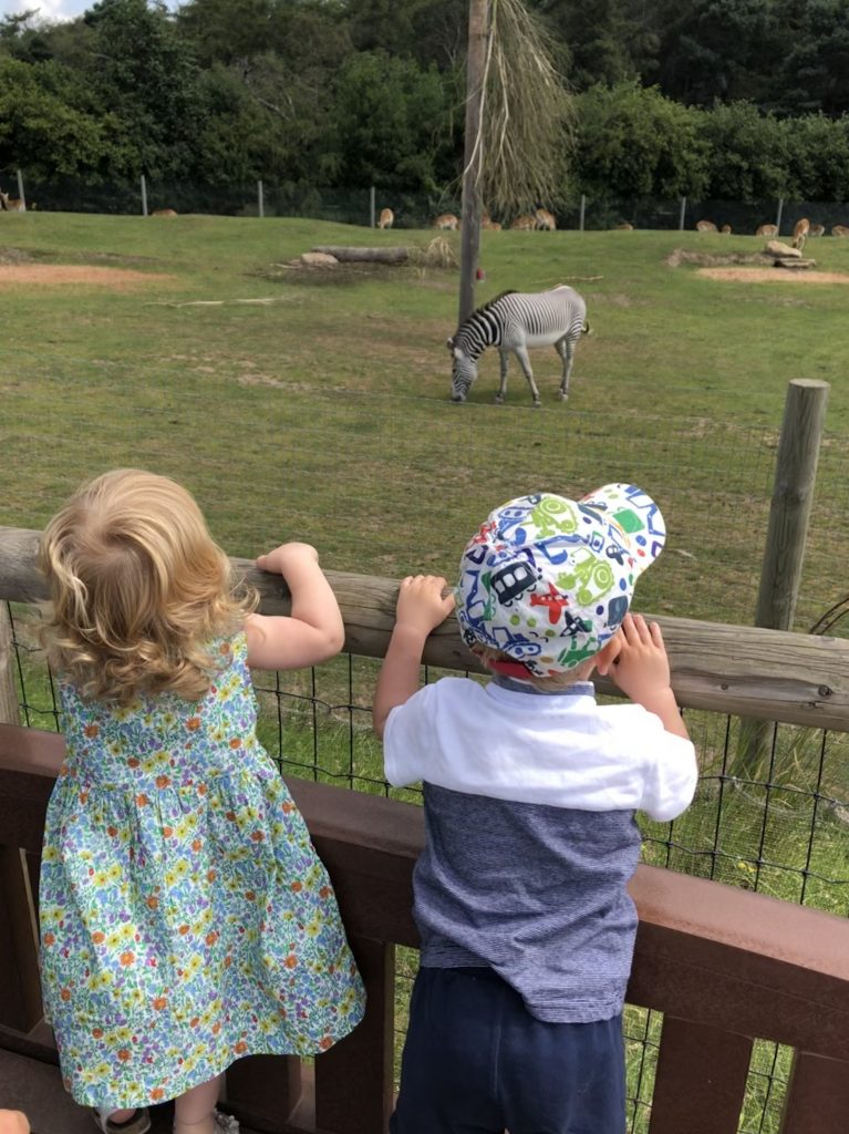 Checking out the zebras at the Wildlife Park