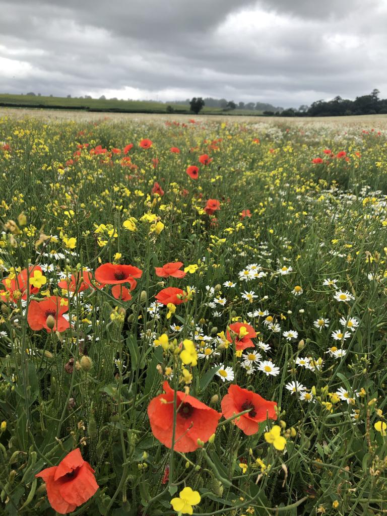 wildflower field near bedale