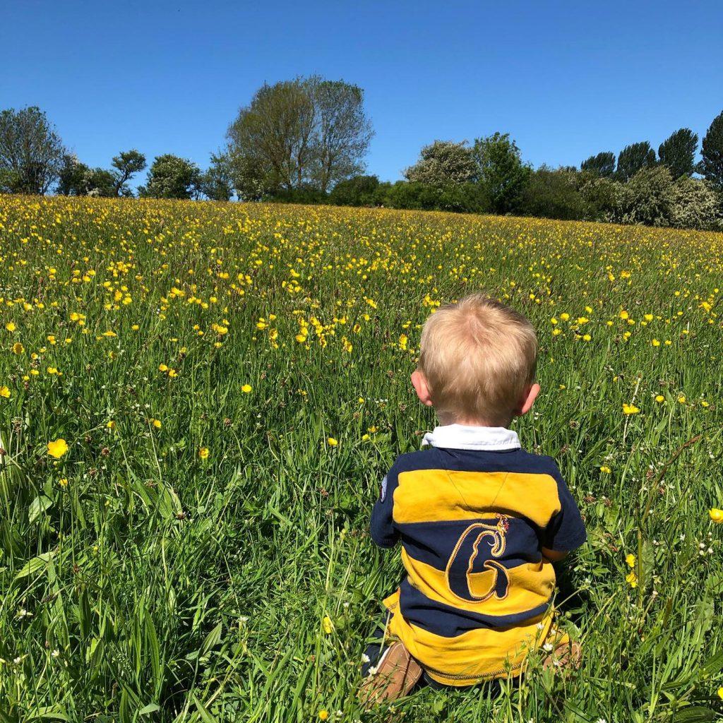 a sea of yellow in gaw flat meadow