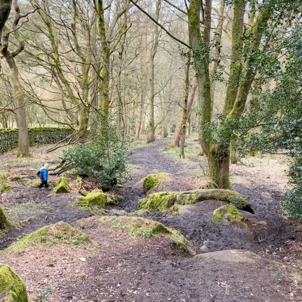 walking in Hebers Ghyll woodland