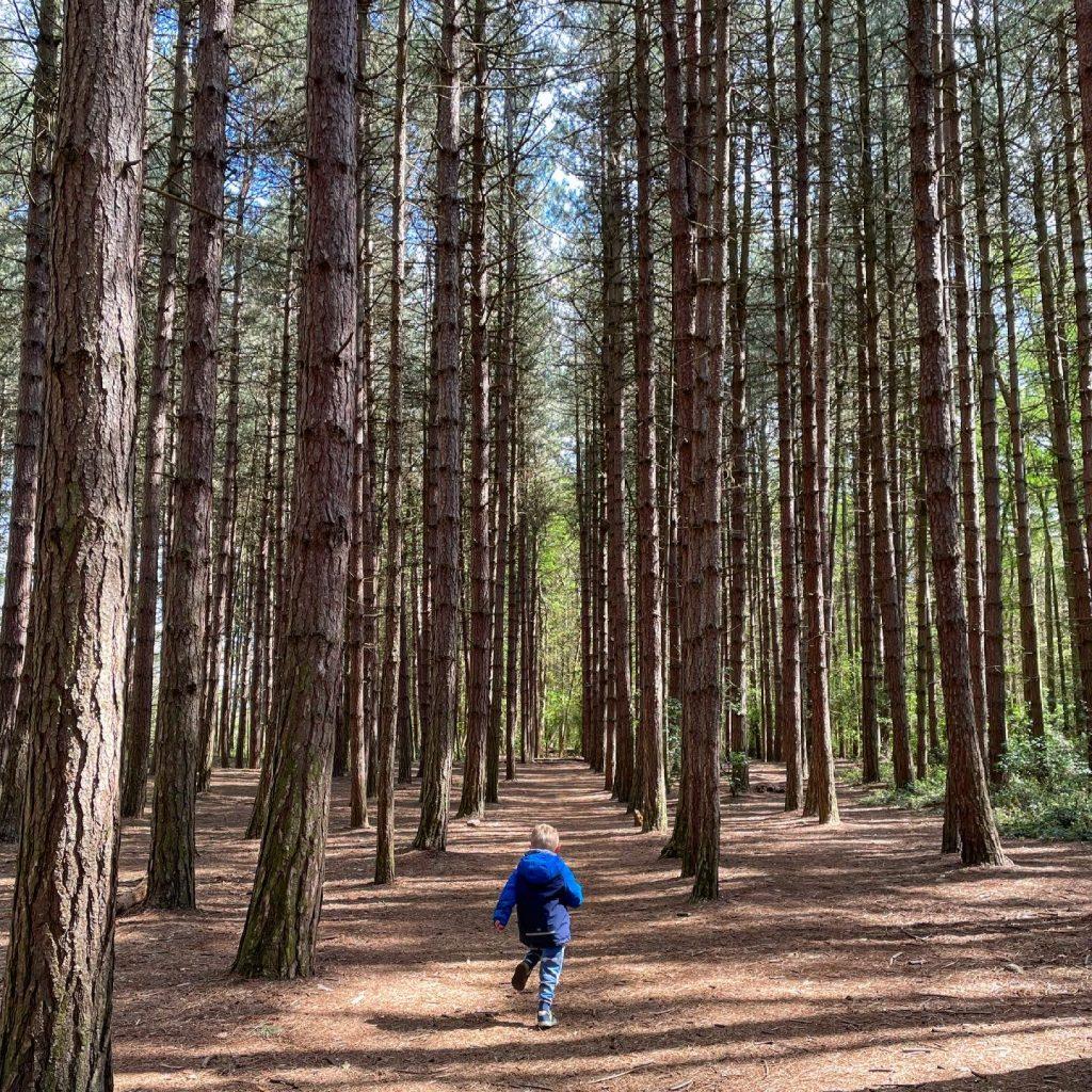 woodland at newmillerdam
