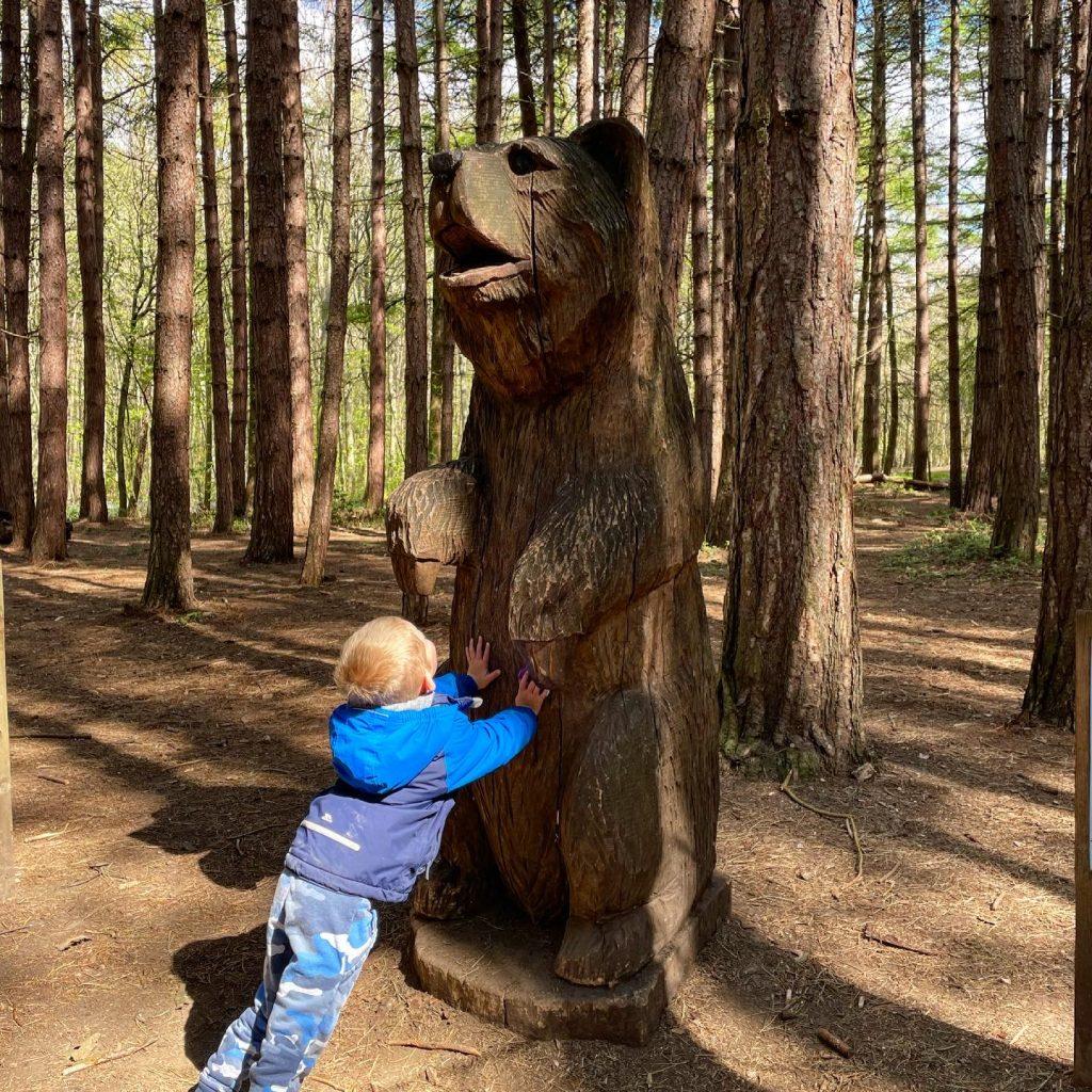 bear on the gnome roam