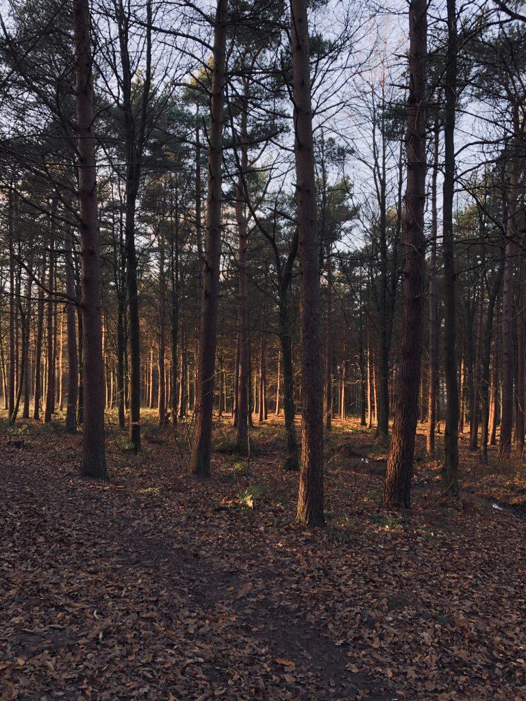 otley chevin woodland