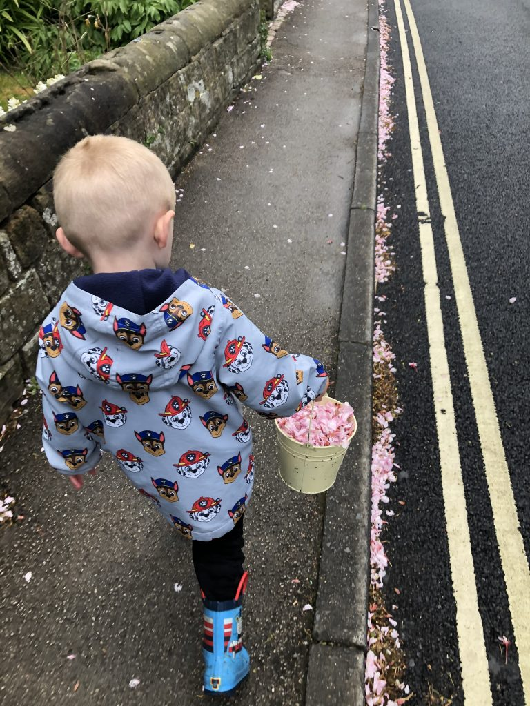 blossom collecting
