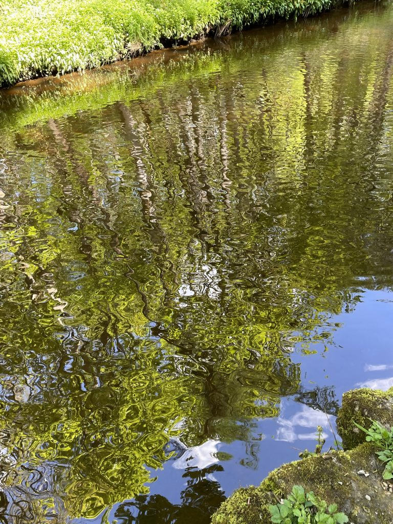 patterns and reflections - mindful wellness