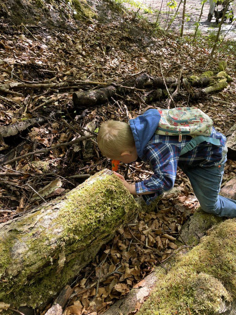 skipton woods wellness walk