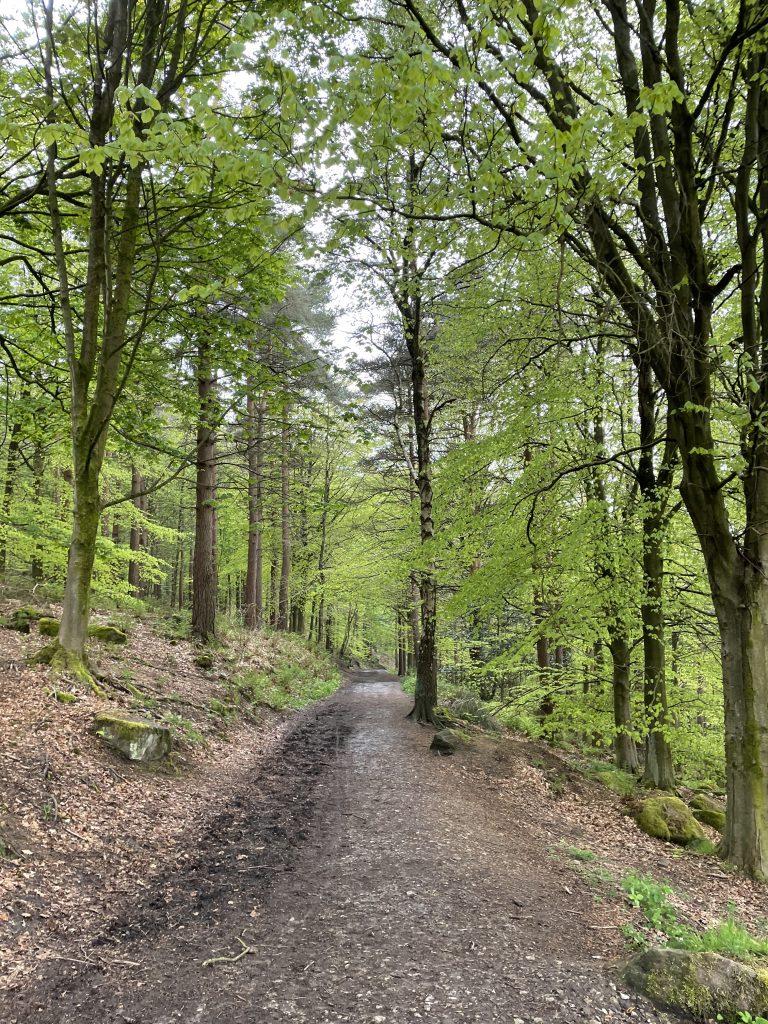 otley chevin woods