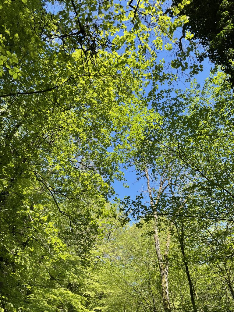 noticing light, colour and shades on skipton woods wellness walk