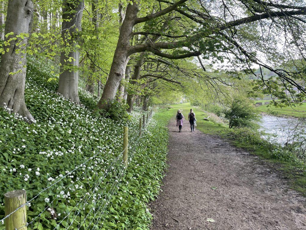 riverside walk, highlights of settle
